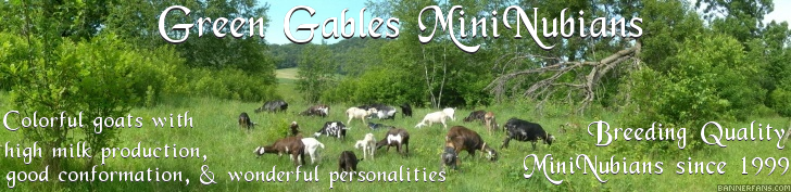 Green Gables MiniNubians - Breeding Quality MiniNubians since 1999